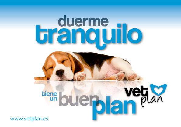 Elvira Valdelvira presenta Vetplan, los mejores planes de salud para mascotas