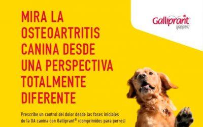 Consigue el Libro EnCORE: la Guía Práctica Ortopédica Canina con Grupo Valdelvira