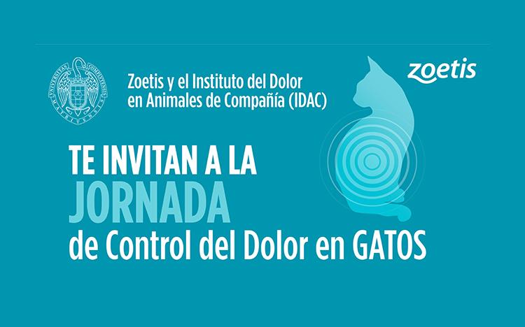 Jornada formativa Online y Presencial: Control del Dolor en Gatos