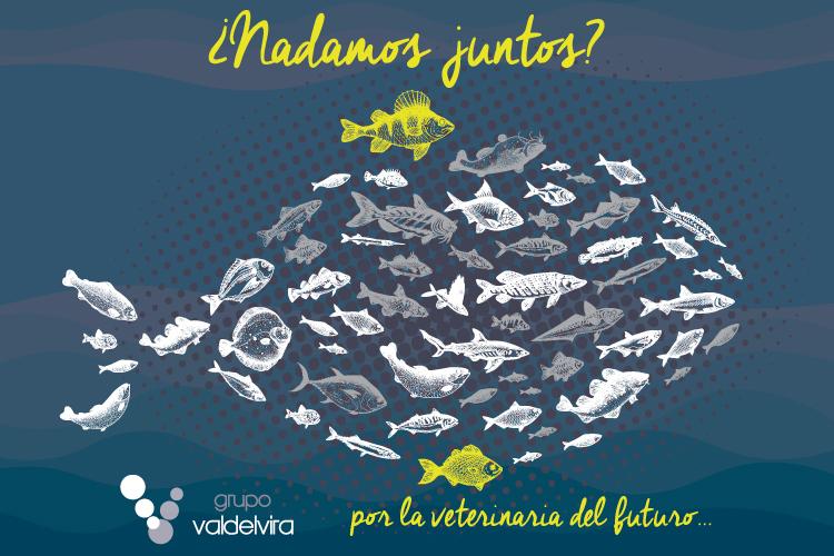 Nueva Imagen de Grupo Valdelvira 2020: ¿Nadamos Juntos?