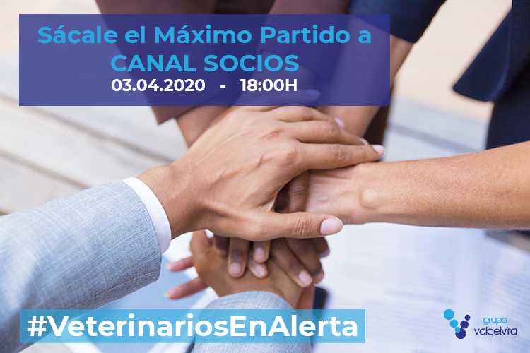 [CHARLA ONLINE] Sácale el Máximo Partido a CANAL SOCIOS – #VeterinariosEnAlerta