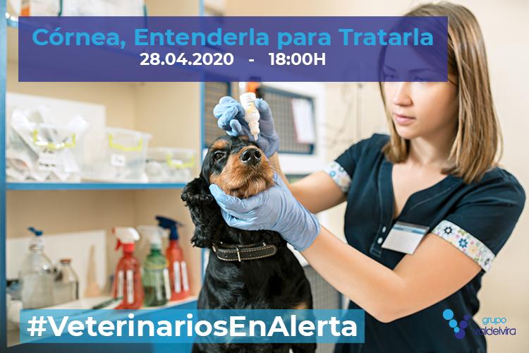 [CHARLA ONLINE] Córnea, Entenderla para Tratarla – #VeterinariosEnAlerta