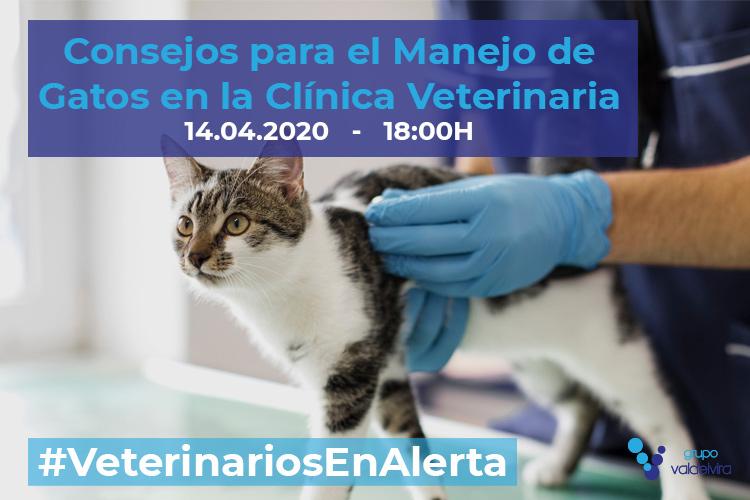 [CHARLA ONLINE] Consejos para el Manejo de Gatos en la Clínica Veterinaria – #VeterinariosEnAlerta