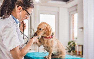 El Sector de las Clínicas Veterinarias continúa creciendo durante los últimos 7 meses