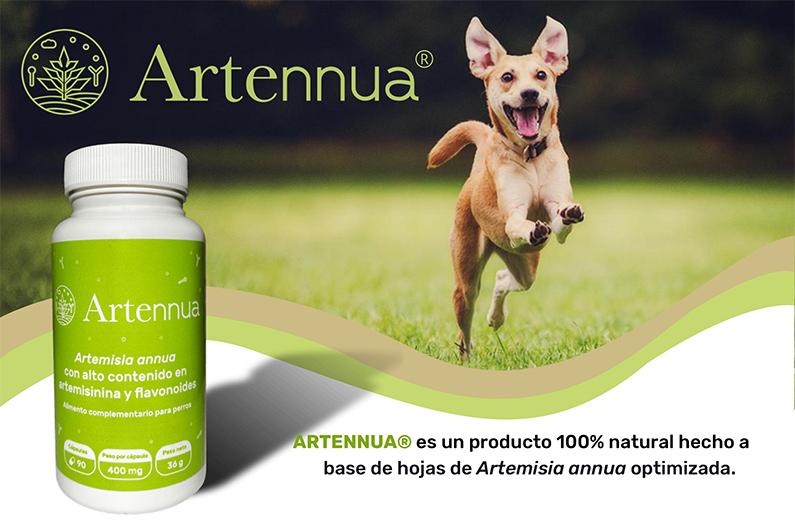 Artennua, complemento alimenticio a base de Artemisia Annua